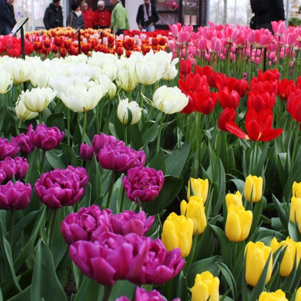 the-nat-channel-natventures-holland-amsterdam-keukenhof-garden-of-europe-greenery