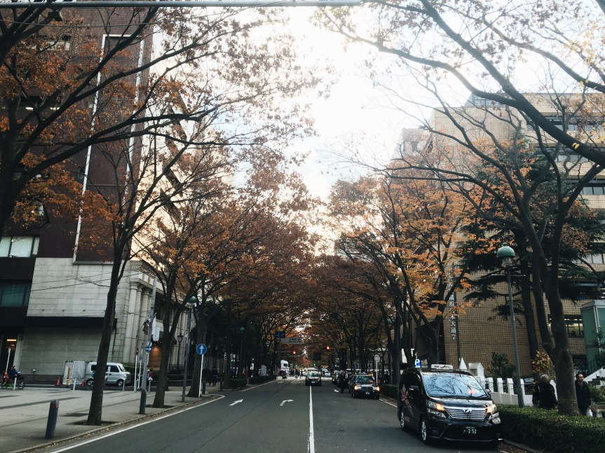 the-nat-channel-japan-yokohama-autumn-brown-leaves