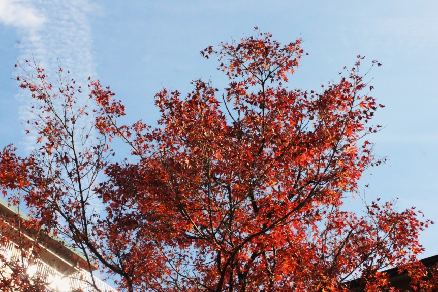 the-nat-channel-japan-hakone-small-town-autumn-leaves