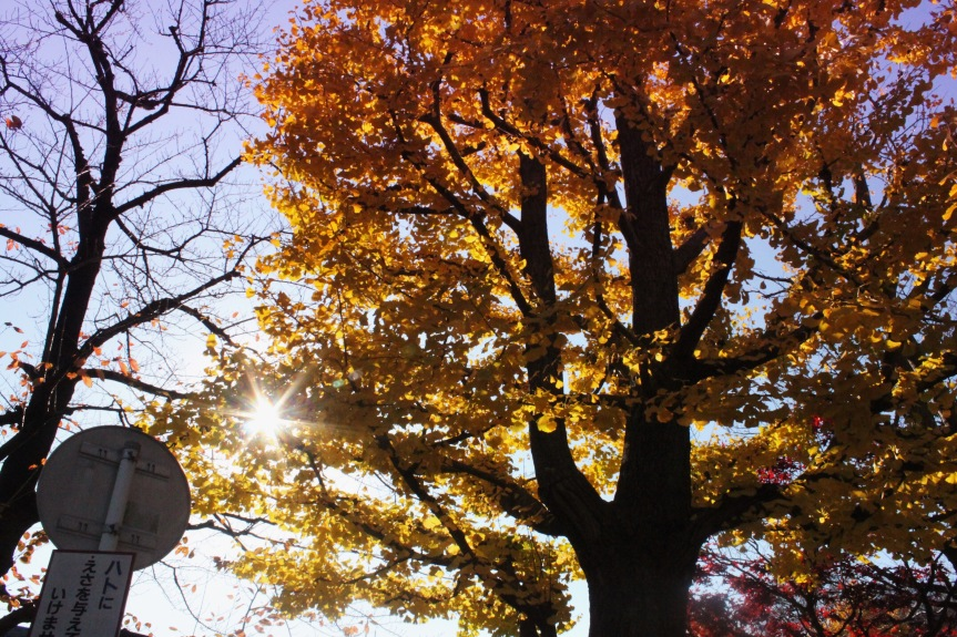 the-nat-channel-japan-tokyo-autumn-leaves-brown