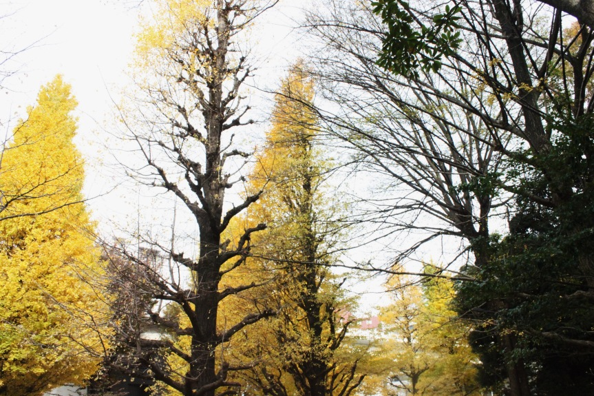 the-nat-channel-japan-tokyo-autumn-leaves-yellow