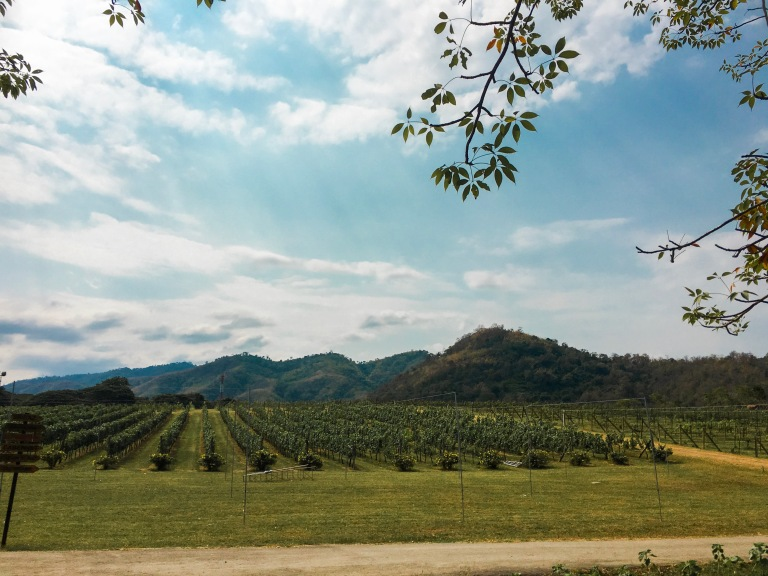 the-nat-channel-natventures-thailand-khao-yai-PB-wine-valley.JPG