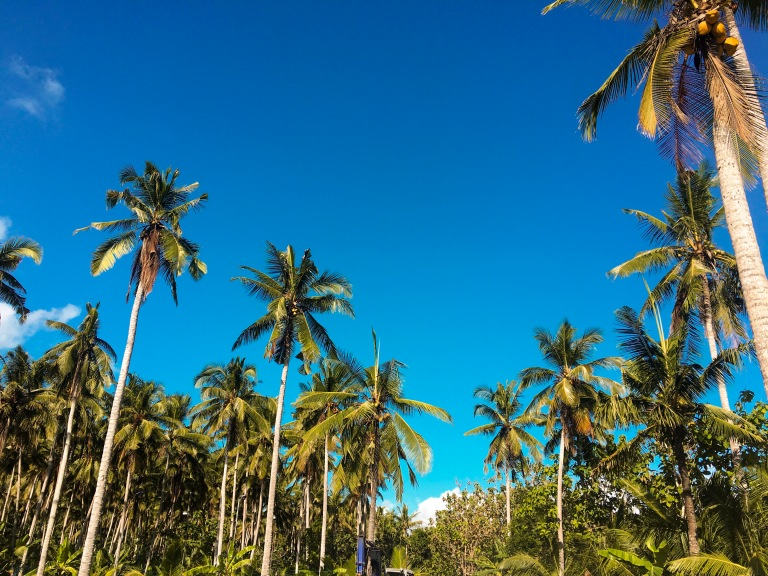 the-nat-channel-natventures-indonesia-bali-nusa-penida-coconut-trees